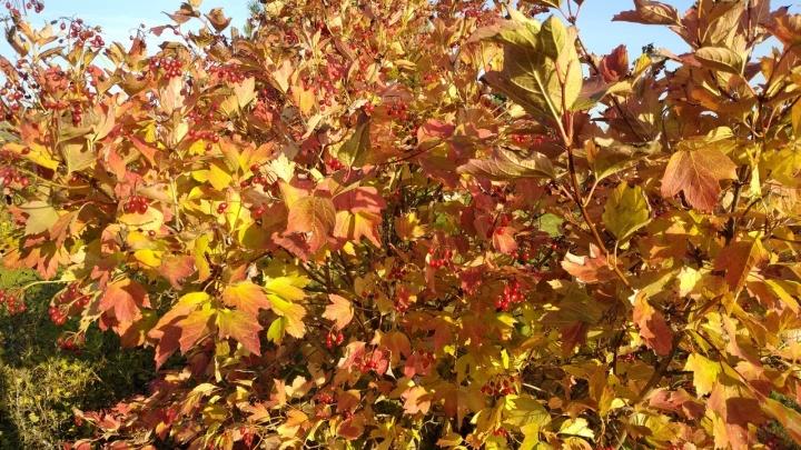Последние дни сентября порадуют курганцев теплом