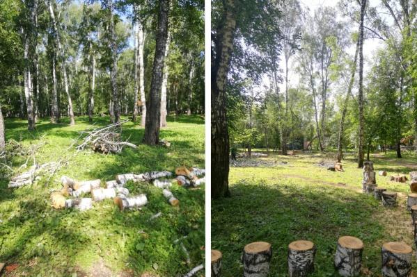 В парке уберут 224 дерева