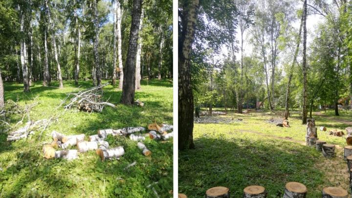 В парке «Берёзовая роща» начали вырубать деревья — в мэрии объяснили почему
