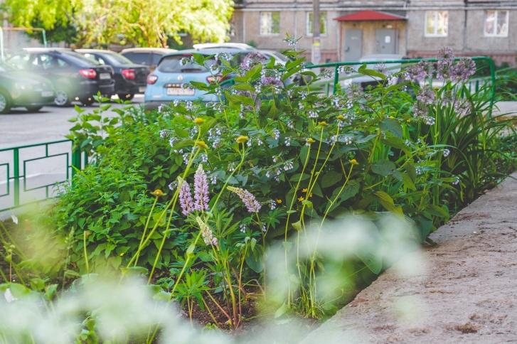 Жители сами высадили растения, покрасили ограждения