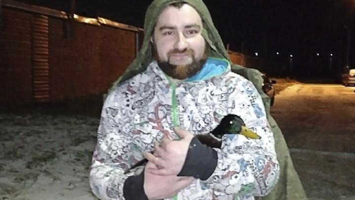 «Бедняга не пережил бы и ночи»: ярославец спас раненого селезня Арчи