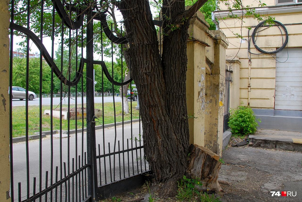 Старые деревья часто конфликтуют с постройками: тот случай, когда спил может быть оправдан. Главное — этим принципом не злоупотреблять