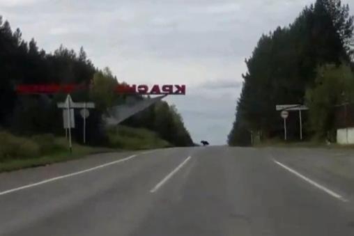«Перебежал через дорогу рядом с машиной»: на Северном Урале медведь попал на запись видеорегистратора