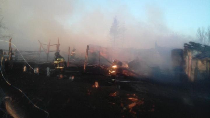 Во время пожара на ферме в Башкирии заживо сгорели десятки животных