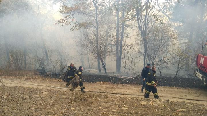 Лесные пожары в Волгоградской области взяли в кольцо