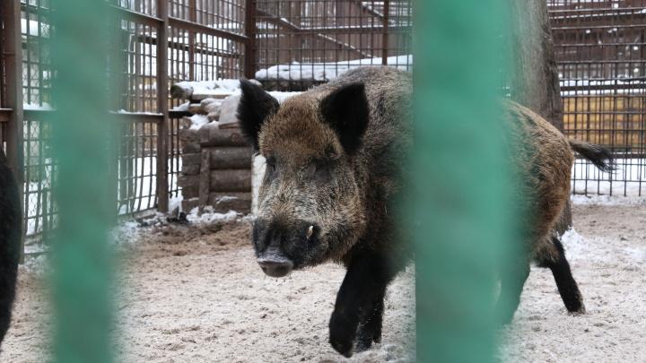 В Белорецком районе Башкирии ввели карантин по бешенству