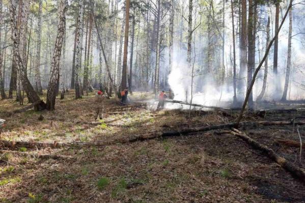 Пожар на территории заповедника тушили четыре дня