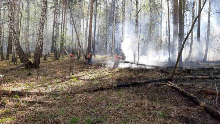 Пожар в Ильменском заповеднике обернулся уголовным делом