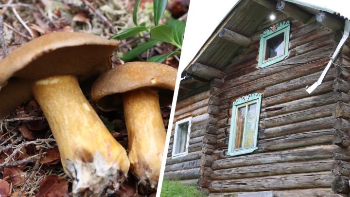 Избы, рыбалка и грибы с ягодами: как Пинежье встречает приезжих — фото