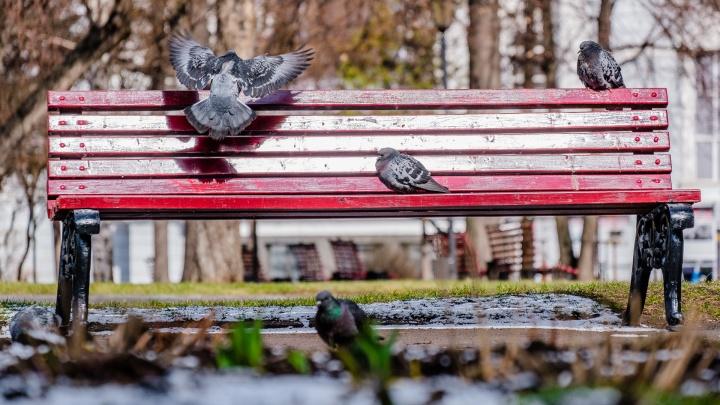 Без аномалий, но теплее нормы: синоптики рассказали о погоде в Прикамье на апрель