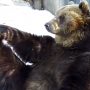 Отдохните от коронавируса: 8 забавных видео с животными