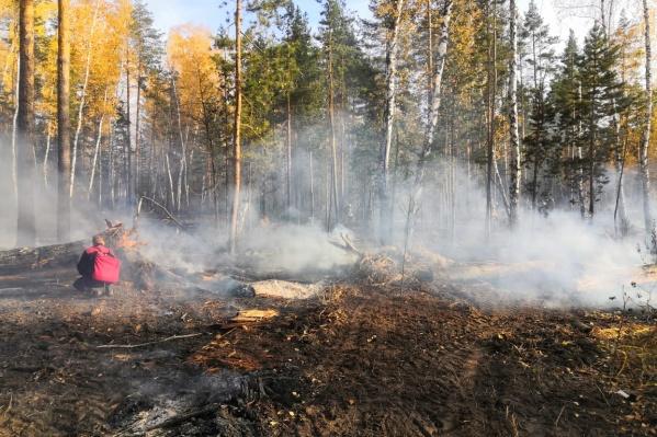 Лес загорелся в 103 квартале Ново-Буянского лесничества