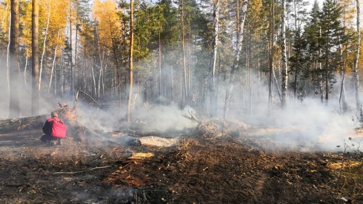 Под Самарой загорелись пять гектаров леса