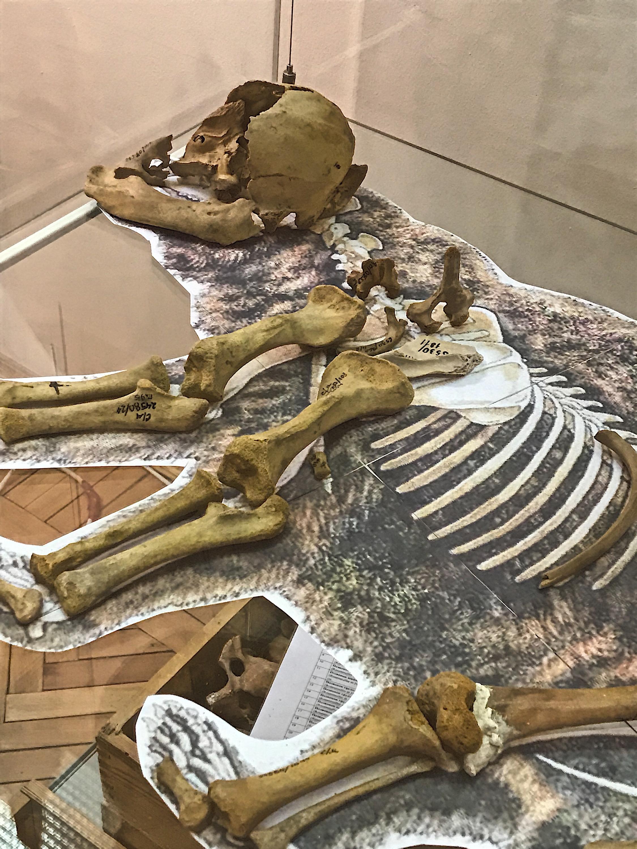 Немного жутко, конечно. Это набор костей шерстистого медведя, он был приподнесен музею в подарок от пермского геолога Близнецова и его учеников, которые в течение 20 лет вели раскопки в древних пещерах и отправили в&nbsp;Cвердловский&nbsp;областной&nbsp;краеведческий&nbsp;музей&nbsp;80 ящиков с костями животных ледникового периода<br>