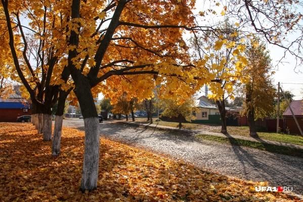 Трактовая улица располагается в Нижегородке. Она особенно красива летом и осенью