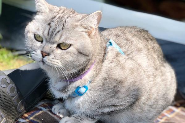 Это фото сделано на Зюраткуле сразу после обнаружения потерявшегося кота