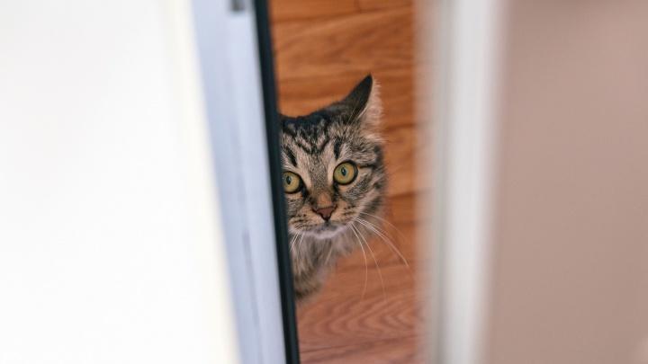 В Похвистневском районе бешеная кошка покусала ребёнка