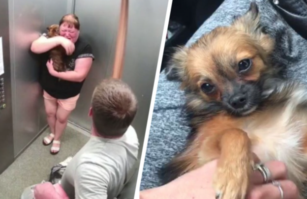 Екатеринбуржец объяснил, почему жестоко избил собаку в лифте на Латвийской
