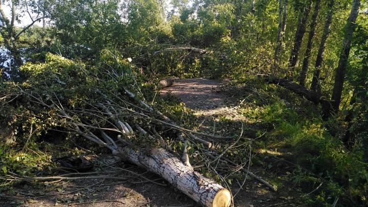 Уничтожение зелёной зоны на правом берегу было инициировано застройщиком «Южного берега»
