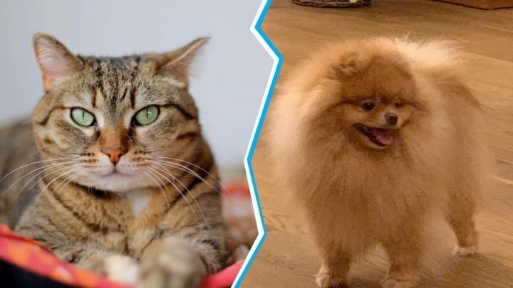 Как выглядит котик программиста? Угадайте, кем работают хозяева этих 10 домашних животных (тест-игра)