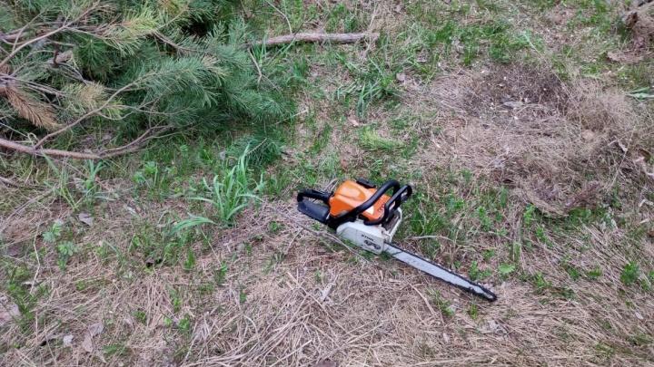 Вырубка деревьев в «Стрижах» закончилась вызовом полиции — работы остановились