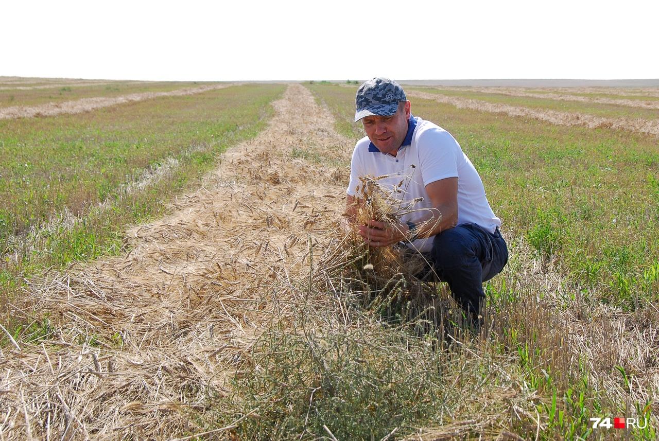 Хозяйство является одним из крупных поставщиков твёрдых сортов пшеницы для производителей макарон. Денис говорит, что твёрдое зерно должно быть слегка прозрачным и янтарным, «даже слегка светиться»