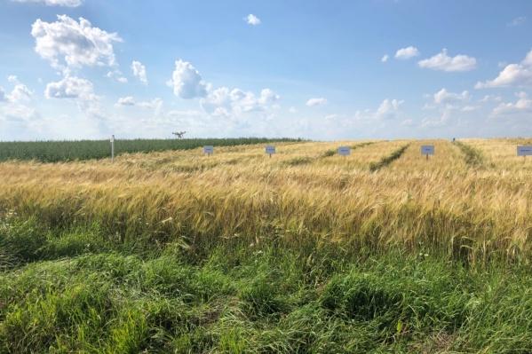 Хорошие перспективы для развития агропроекта представляет Ярославская область