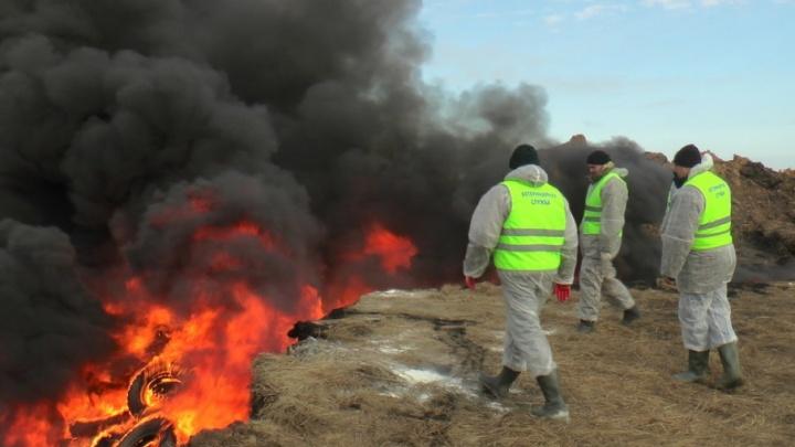 В Самарской области хотят ликвидировать 70 скотомогильников