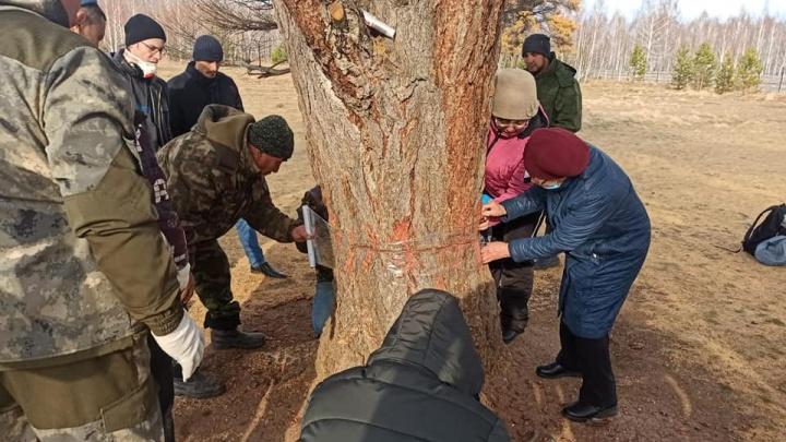 Активисты из Башкирии рассказали, как спасали уникальные лиственницы, пострадавшие от вандалов