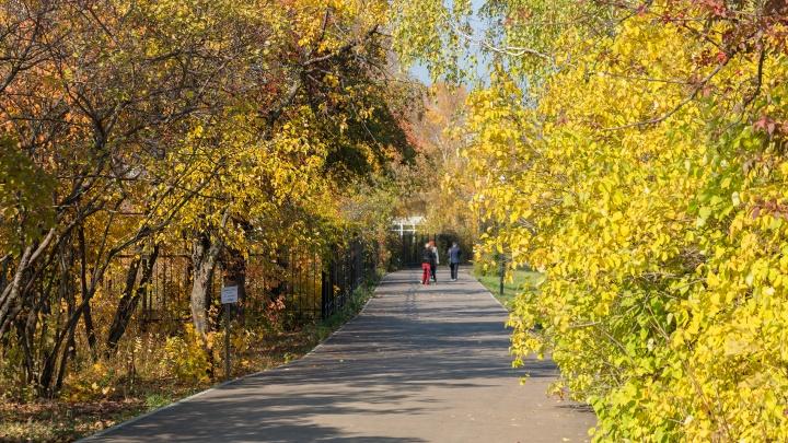 Самарский университет озвучил условия входа в Ботанический сад