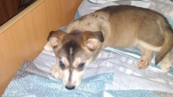 «Она даже не дышала от счастья»: покусанный собаками и спасенный волонтерами щенок обрел новый дом