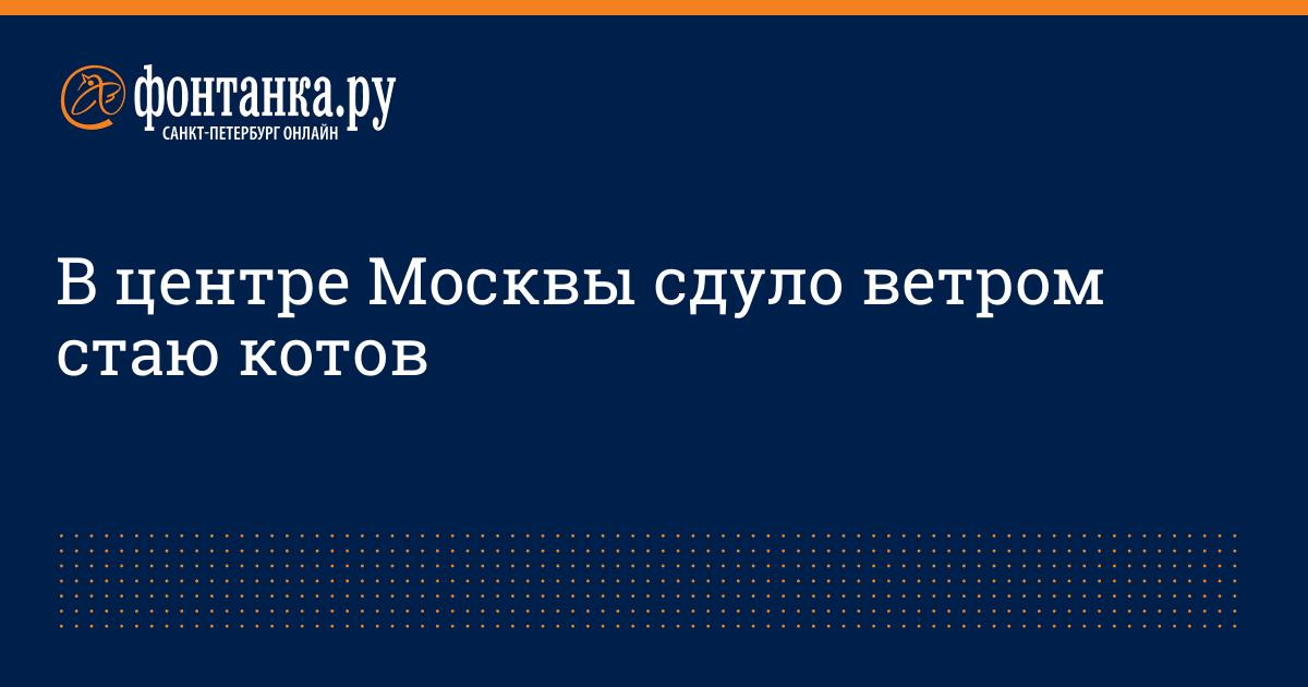 В центре Москвы сдуло ветром стаю котов