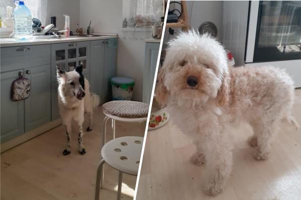 Пёсика слева зовут Хэппи, справа — Брауни