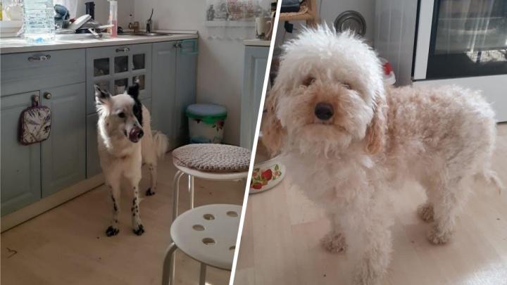 Волонтеры пытаются пристроить собак убитой Кристины Журавлевой. Родственникам они не нужны