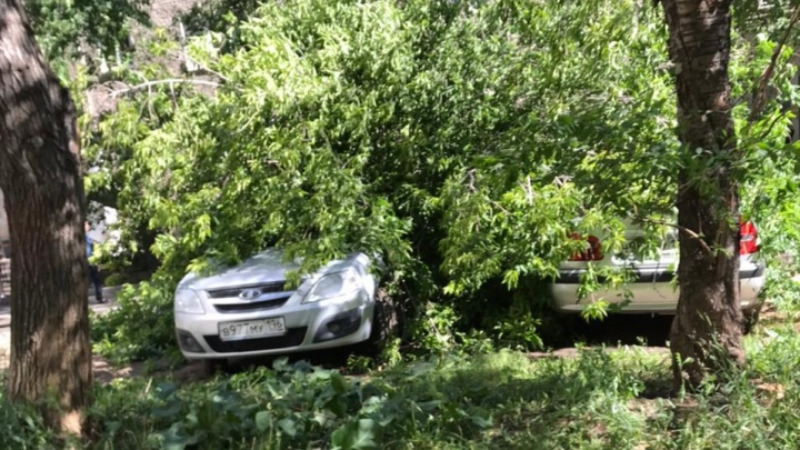 Деревья падали на людей и перегораживали дороги: последствия урагана в Екатеринбурге и области