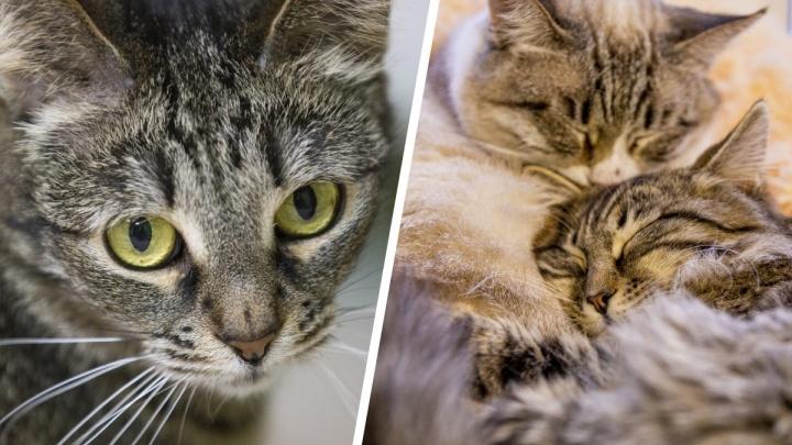 Наигрались и бросили: смотрим в глаза ярославским котам, пережившим предательство людей