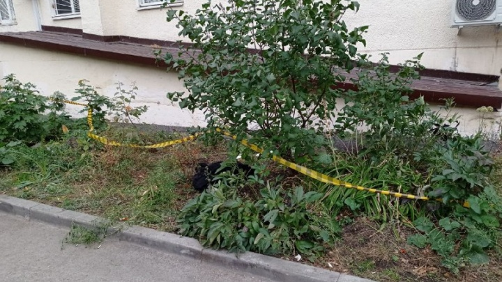 «Тот, кто это сделал, просто животное»: в Уфе обнаружили мертвое тело женщины без нижнего белья