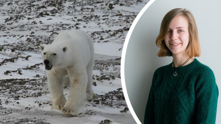 Прогулки по Арктике. Северянка рассказала, как наблюдать за белым медведем и не стать его обедом