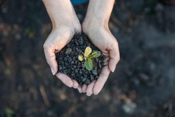 Ежегодная экологическая акция «Час Земли» организована Всемирным фондом дикой природы (WWF)
