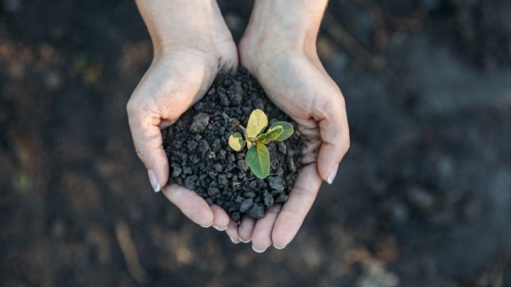 Архангельский ЦБК стал генеральным партнером акции «Час Земли» в 2021 году