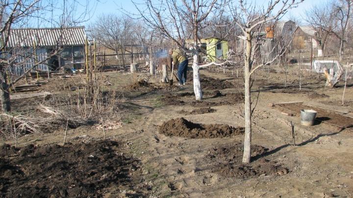 Готовьте счетчики и деньги: в Волгограде начат сезон платного полива огородов