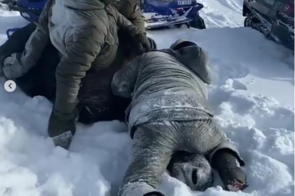 «Да и так сдохнет»: браконьеры загнали в лес беременную лосиху и задушили ее голыми руками