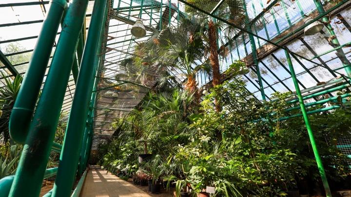 Никаких кафе: ректор ЮФУ рассказала, как изменится Ботанический сад после введения платного входа