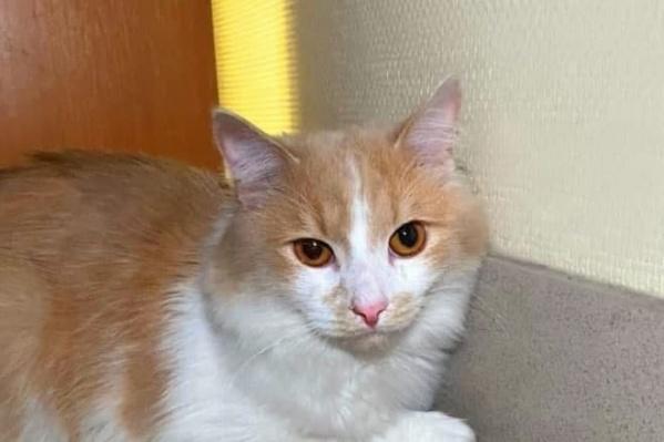 В новой семье кота назвали Персиком