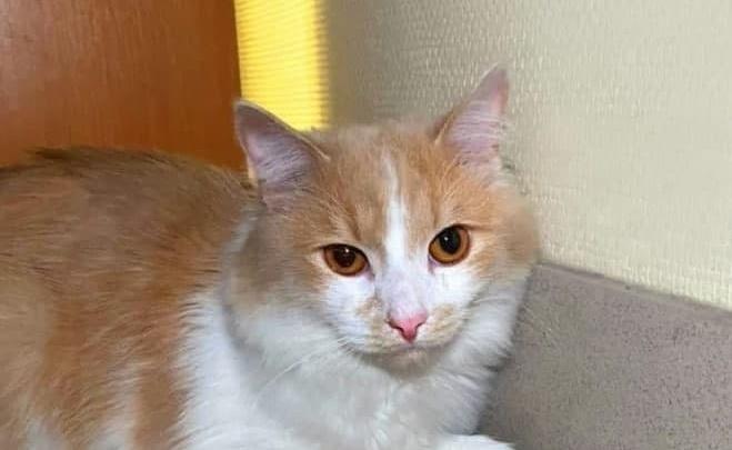 В Екатеринбурге умер кот, которого хозяйка бросила в аэропорту Кольцово