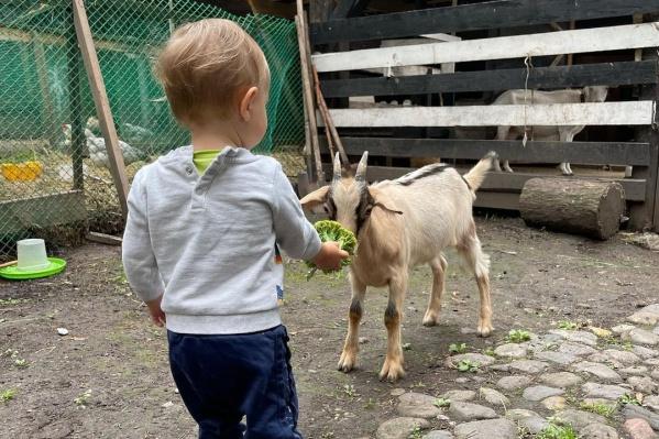 Сын Ольги — активный мальчик, но количество шагов удивляет