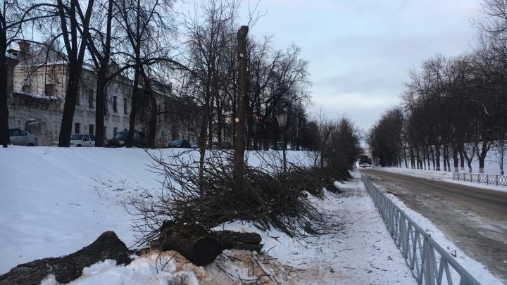 В центре Ярославля вырубили половину аллеи: как это объяснили власти
