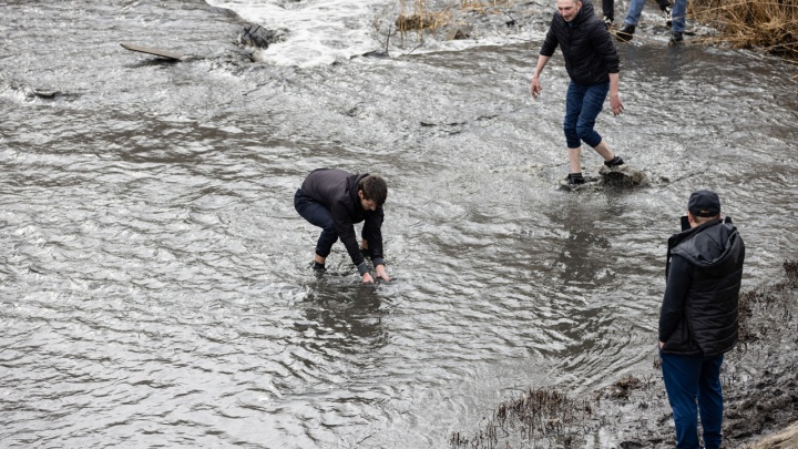 Ростовчане взялись мешками вывозить рыбу с обмелевшего Северного водохранилища