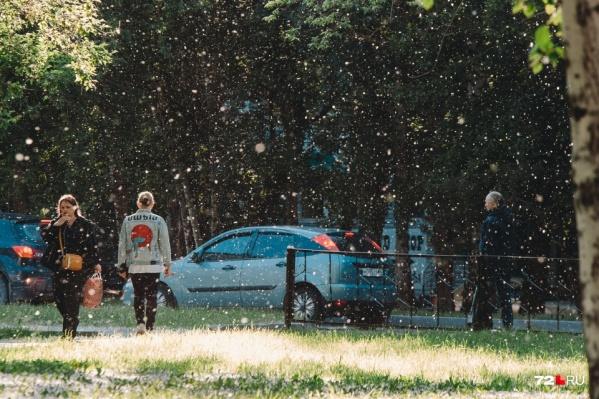 Пока одни с восторгом рассматривают пушистые хлопья, другие стараются избегать появления на улице из-за сезонной аллергии