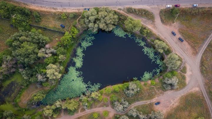 Оно буквально кишит змеями: смотрим на волгоградское озеро лотосов с высоты. Такого вы еще не видели